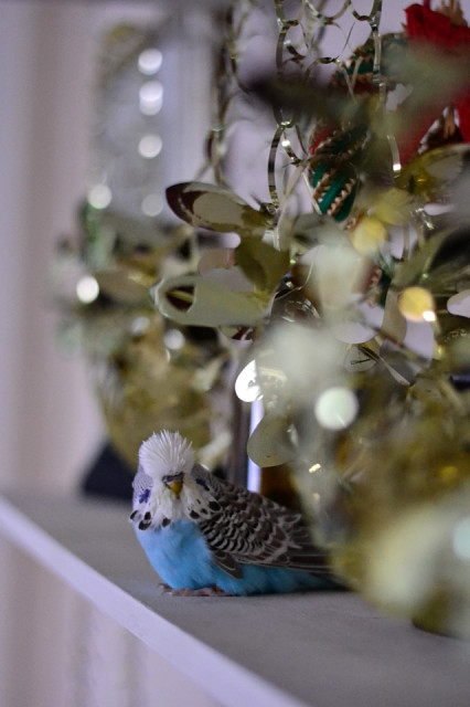 Budgie Christmas Decorations